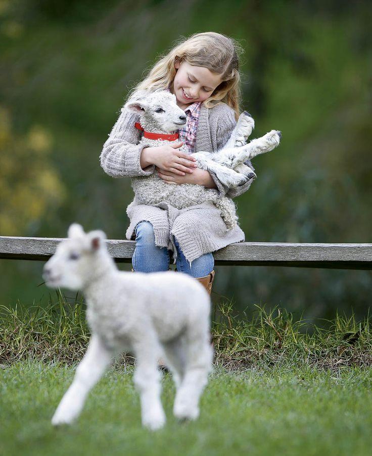 RoyalAuto July 2016. Free family activities in Victoria. Collingwood Children's Farm. Photo: David Caird / Newspix. #free #victoria #collingwood #collingwoodchildrensfarm #farm #lamb #animals