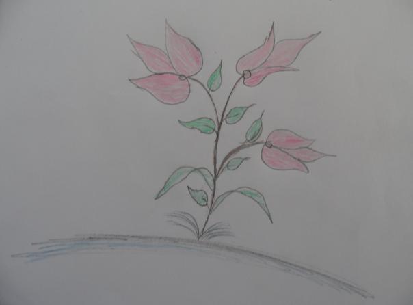 Gul Makai Abdullah, táto slečna má  14 rokov, názov obrázka -  Kvet