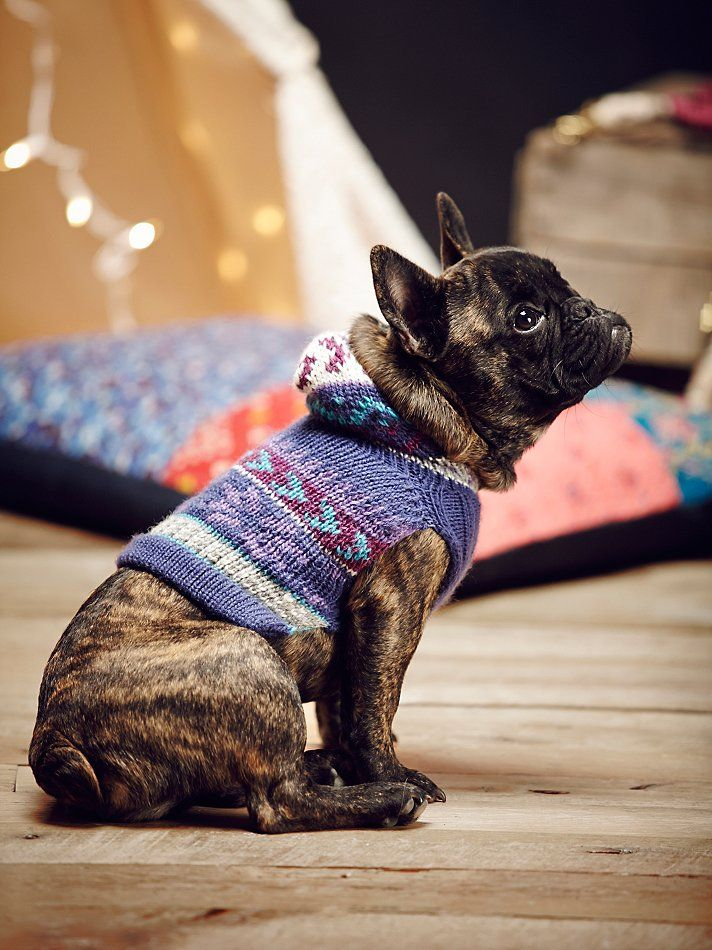 df2e2a62609c Perika Fairisle Dog Sweater at Free People Clothing Boutique | Wilful north  / Dog Loves | Dogs, Dog sweaters, Cute dogs