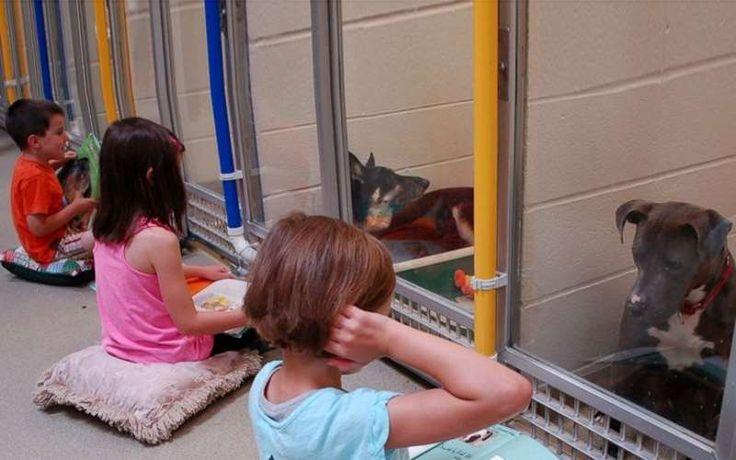 Παιδιά διαβάζουν βιβλία σε τρομαγμένα σκυλιά που φιλοξενούνται σε καταφύγιο
