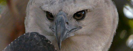Aves de Rapina BR | Aves de Rapina o que são?
