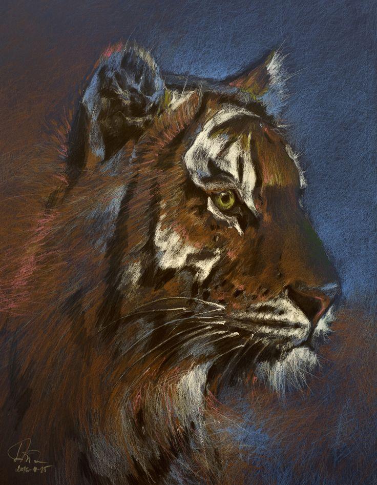 Tiger (Colored Pencils Prismacolor) 65x50 cm
