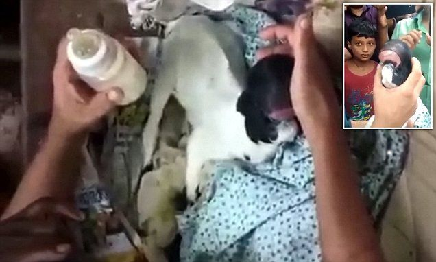 Baby goat is born with no EYES and 'human-like' lips in India
