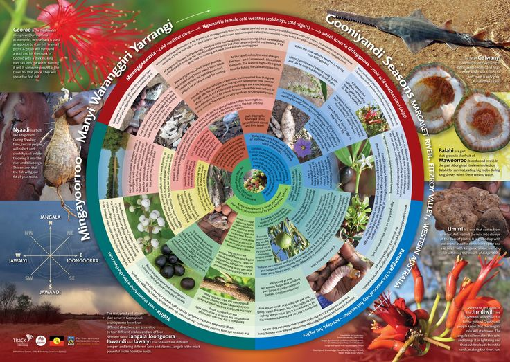 Gooniyandi seasons calendar - CSIRO