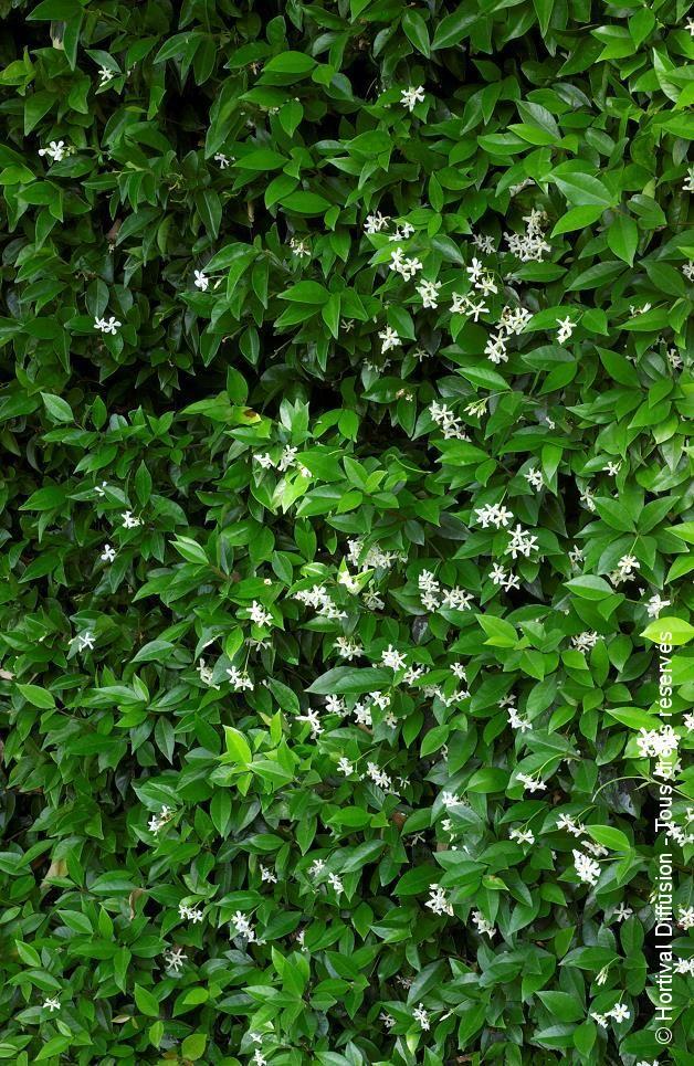 Les 94 meilleures images propos de garden wall sur for Entretien jardin nantes