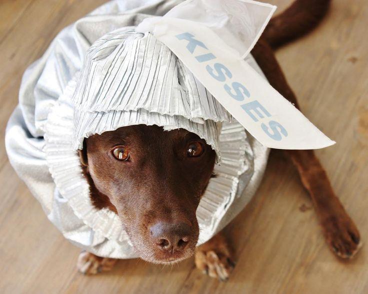 Costume Halloween chien argent Labrador chocolat