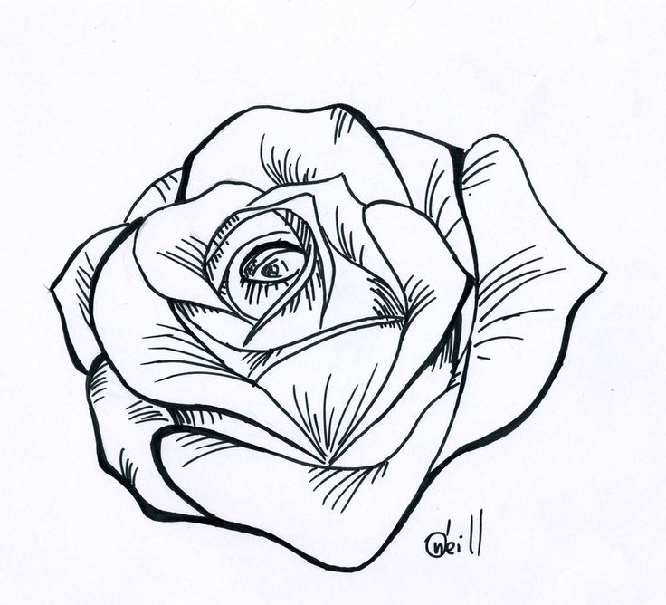 traditional rose line drawing b line drawing rose b cliparts co