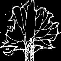 Tree 2d Elevation (dwg - Autocad drawing) - Trees - Elevation