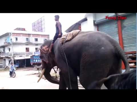 Big elephant on street. Elephant by money collection