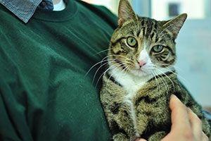 Bartonells henselae...cat scratch disease...cat scratch fever. Most people with cat scratch disease have been bitten or scratched by an infected cat.