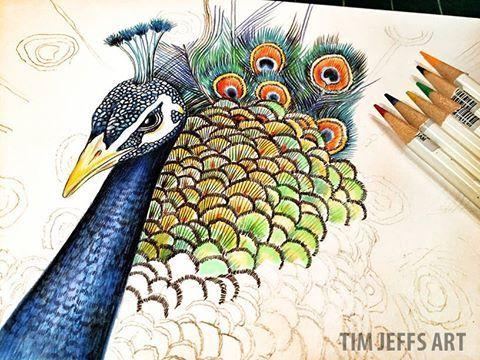Peacock illustration by @timjeffsart using @tombowusa Irojiten Colored Pencils