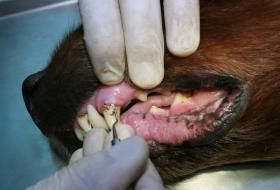 Natural Cures for Canine Heart Worms