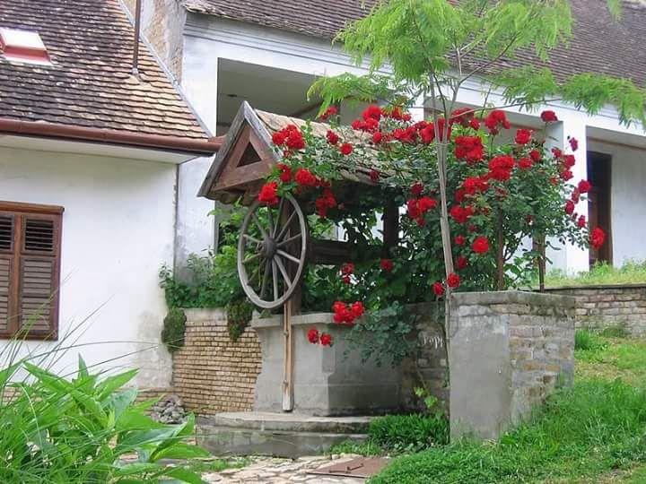 Mohácsi, nyári szépség www.paraszthazazorok.hu