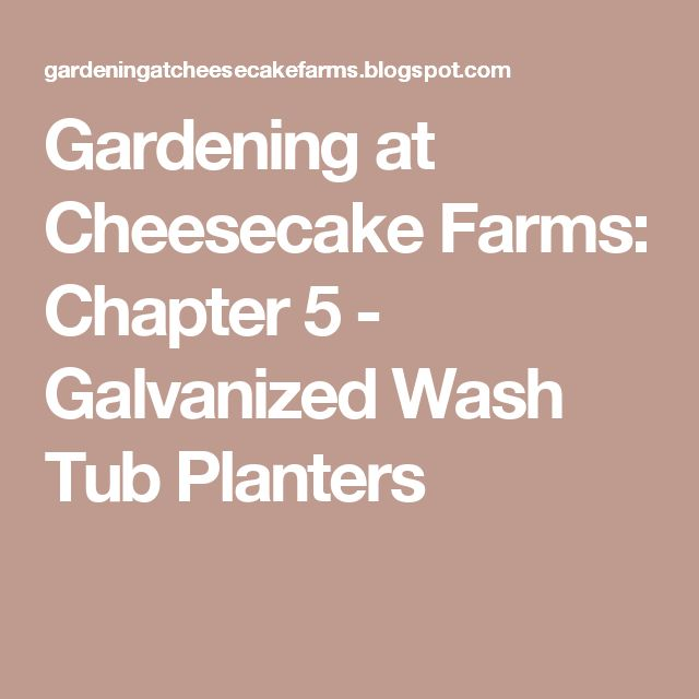 Gardening at Cheesecake Farms: Chapter 5 - Galvanized Wash Tub Planters