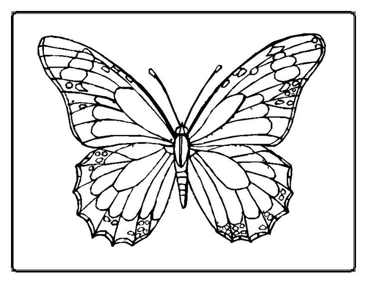 hard butterfly coloring pages - photo#26