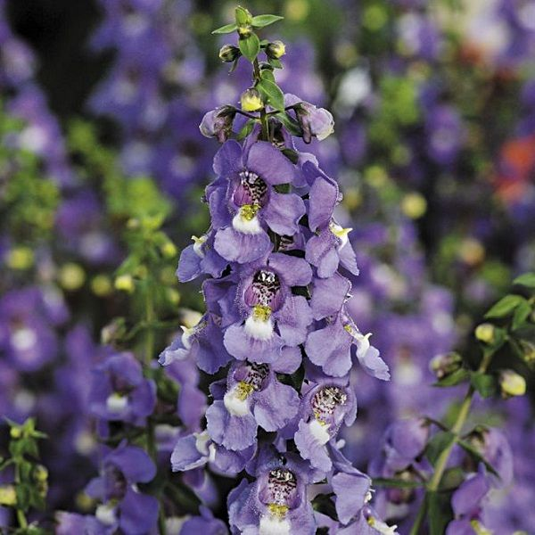 las-mejores-flores-para-cultivar-en-maceta-a-pleno-sol-14