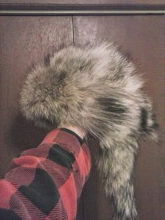 Foremost Coyote Hunting: How to make a fur hat from a coyote pelt