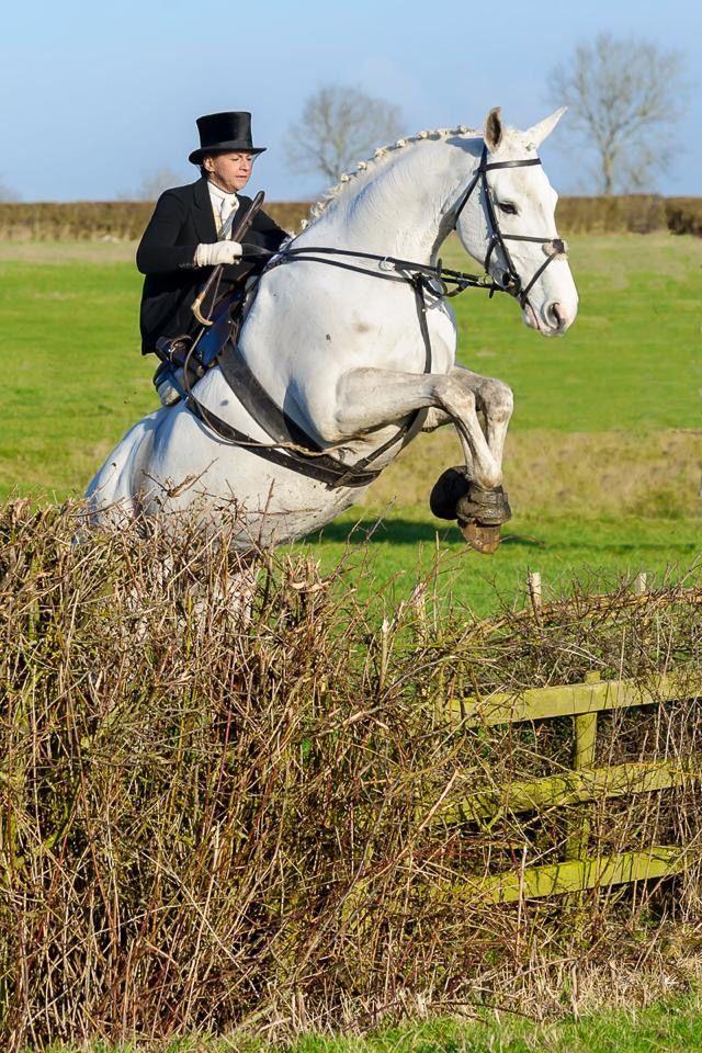 Amy Bryan Dowell riding  Ceilis Bouncer side saddle, fox hunting with the Belvoir Hunt.