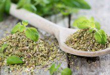 Léčivé oregano – kde ho sbírat a jak pěstovat + 5 domácích receptů