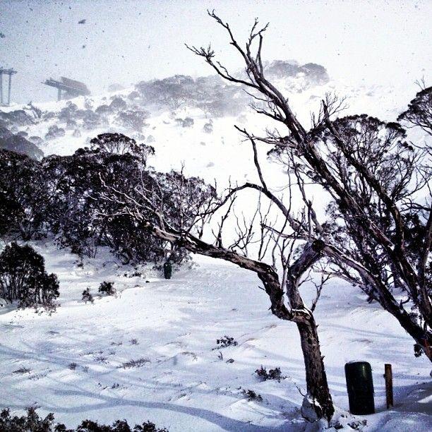 Loving the fresh snow at #thredbo today #snow #lovewinter #misssnowitall