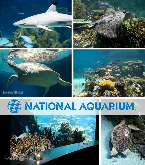 National Aquarium - Family Friendly Activities in Baltimore, Maryland before the cruise