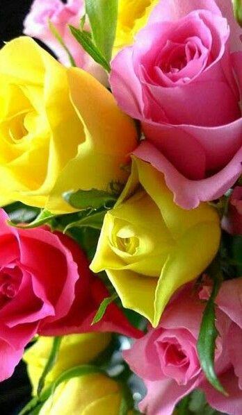 Pin tillagd av britt marie ericsson p vackra rosor pinterest vackra rosor och rosor - Fotos de ramos de flores preciosas ...