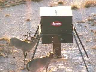 stand corn automatic and feeder feeders for broadcast deer orig capacity sale fill