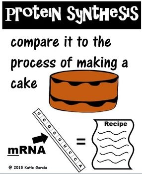 Cake Analogy For Protein Synthesis