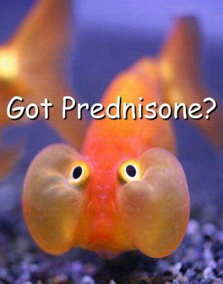 Hahaha....this is exactly how I feel. #lupus #prednisone #moonface