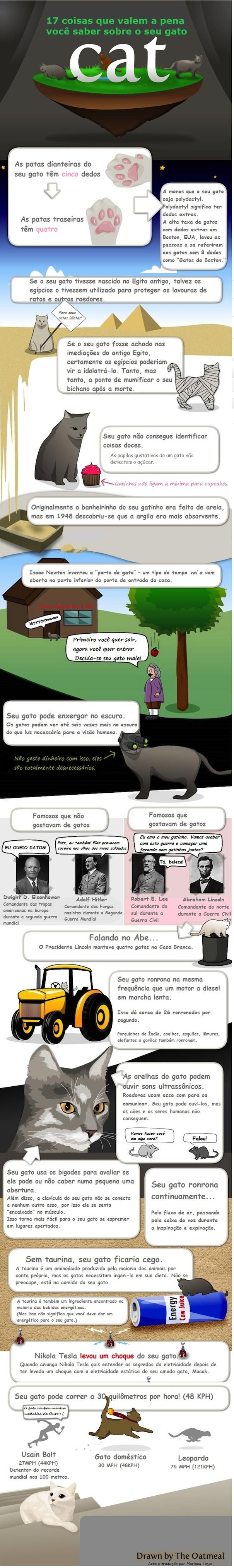 17 Curiosidades Sobre os Gatos