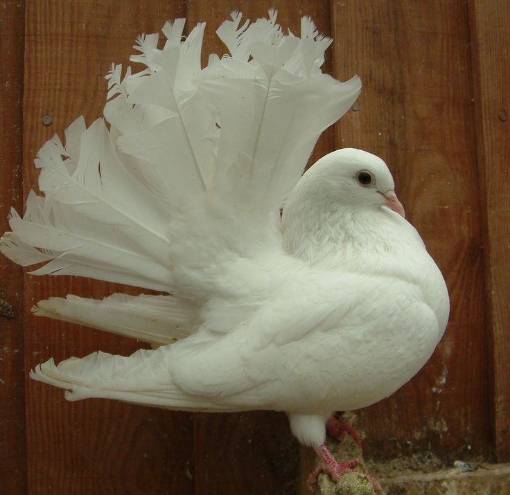 white pigeon hindu single men Indian interracial relationships & dating 36k likes indian and non indian mingle is a facebook group that encourages interaction between indians and.