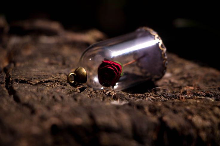 La Rose-Neige #sapin #globe #verre #féerique #bijoux #faërie #artisanat #médaillon #fleurs #fée #boutique #france #vente #neige #bronze #herbe #mousse #sauvage #pendentif #bijou #collier #chaîne #freelance #autoentrepreneur #joli #original #unique #vert #blanc #froid #hivers #norvege #medieval #steampunk #miniature #globedeverre #bois #nature #foret #branche #shooting #photo #art #artiste #création #faitmain #rose #rouge #blancheneige #disney #labelleetlabete #magie #magique #pourpre
