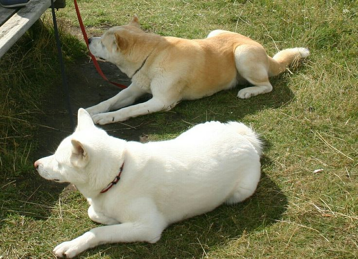 Akuma en Machiko in Denemarken