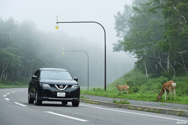 Shiretoko of Hokkaido is the paradise of wild animals♡  ★NISSAN Rent a Car (EN.)https://nissan-rentacar.com/english/  ★BLOG (EN.)https://goo.gl/fFNX0u  #Shiretoko #Hokkaido #wildanimal #fox #bear #Nissan #rentacar #rentalcar #japankuru