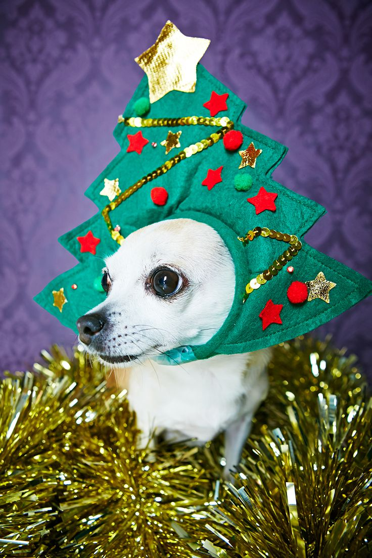 Dress up xmas games - Find This Pin And More On Christmas Doggy Dress Up