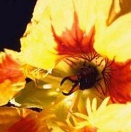 How to Get Rid of Earwigs in Your Garden