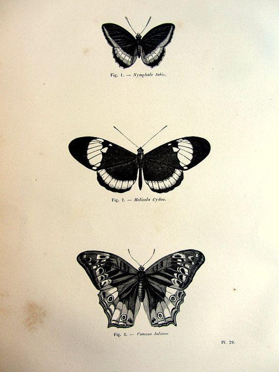 1860 Vintage rara farfalla papilion originale stampa, antiquariato, incisione, illustrazione di piastra di lepidotteri, animale di zoologia