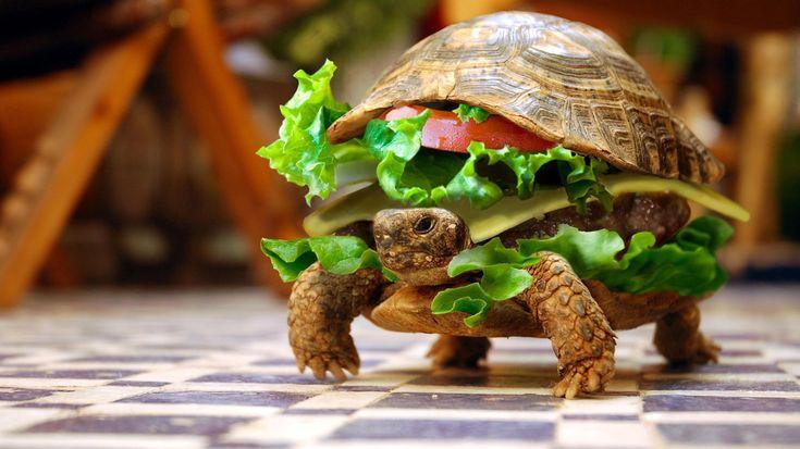 turtle-gamburger-wallpaper-1366x768.jpg (1366×768)