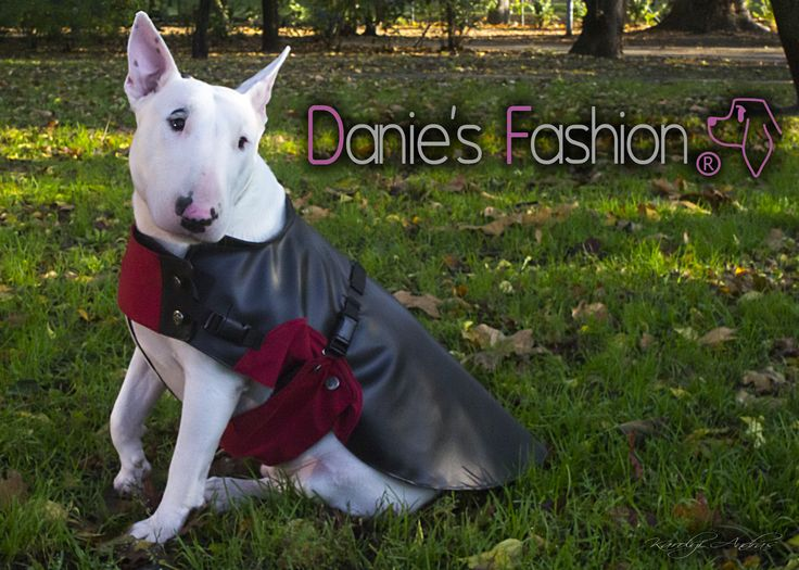 Dog leather coat http://daniesfashion.com/