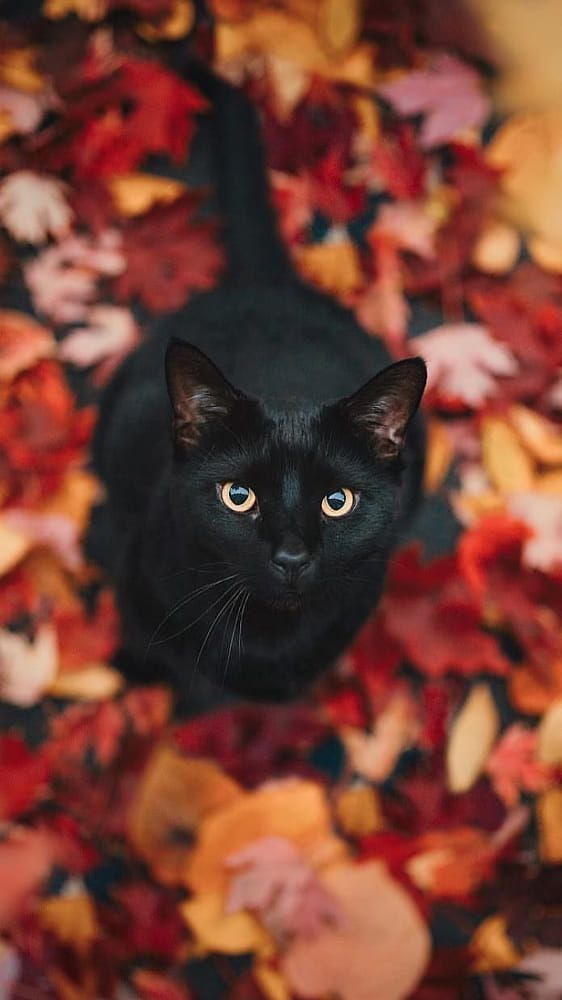 cat cute aesthetic cats halloween 500px animals iphone baby funny web chat
