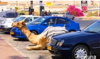 Парковка для верблюдов...