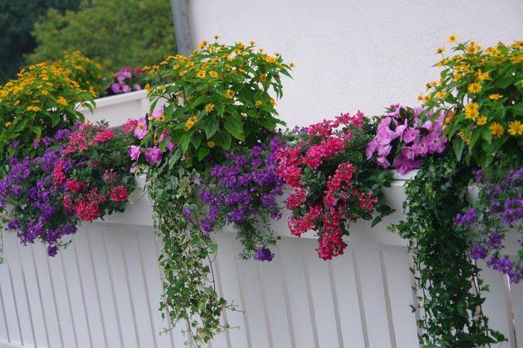 Cómo elegir las plantas para mi balcón - http://www.jardineriaon.com/como-elegir-las-plantas-para-mi-balcon.html