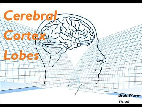 Cerebral Cortex Lobes Binaural Beats Isochronic Tones & Meditation Music | Somatosensory Cortex - YouTube