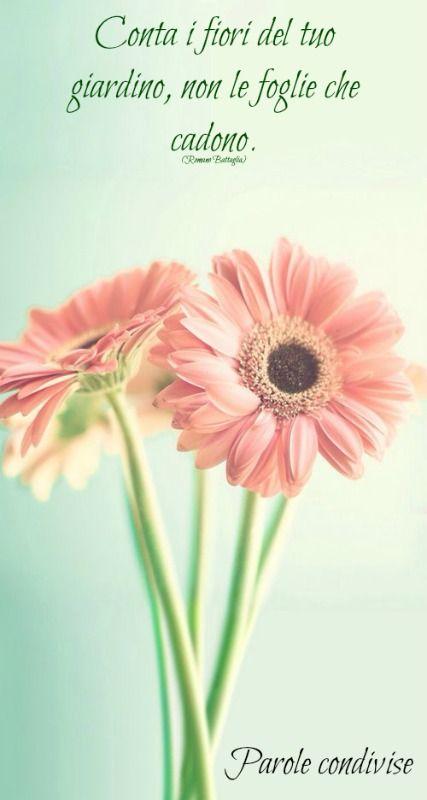 Conta i fiori del tuo giardino, non le foglie che cadono. (Romano Battaglia)