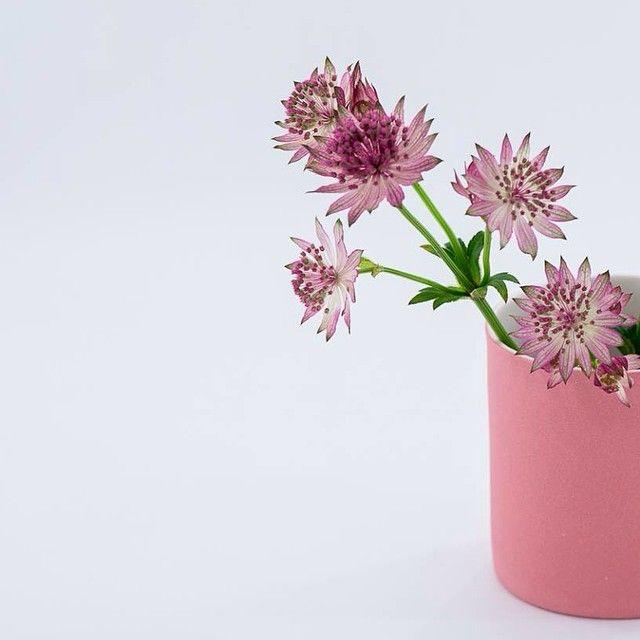 Rosa blomst i rosa vase. #keramik #porcelæn #estherelisabeth #blomst #rosa #madebyhand