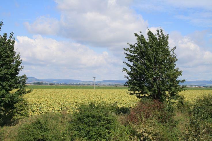 příroda, pole, léto