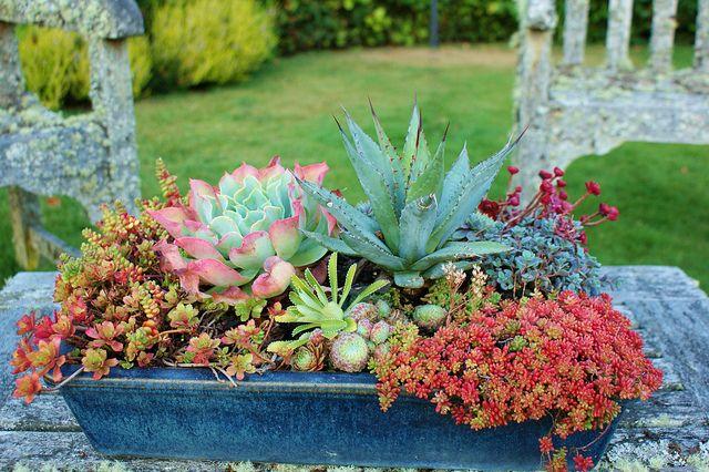 Succulent planter agave echeveria sedum 2 by Planters for succulents