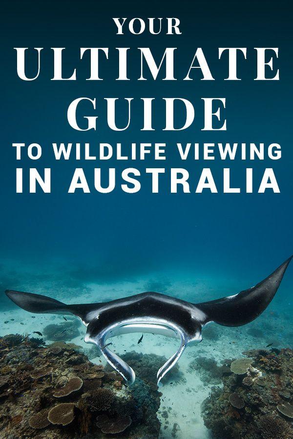Australian Wildlife Australian Wildlife Wildlife Tour Wildlife