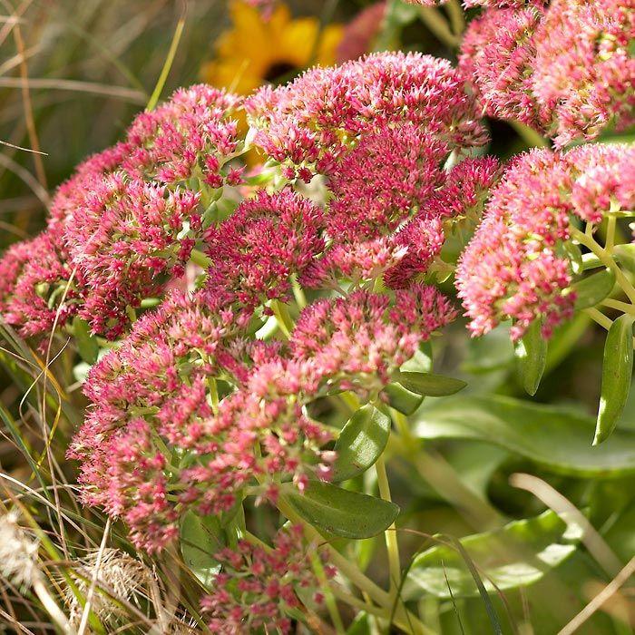 316 Best Gardening Tips Images On Pinterest