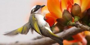 Красивые фотографии птиц и весенних цветов от тайваньского фотографа Lucia Lin